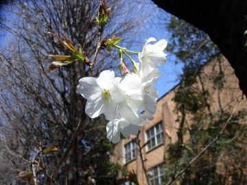 農学部の春
