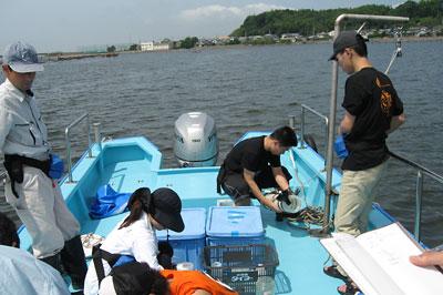 浜名湖の臨海実習(水圏生物科学専攻)
