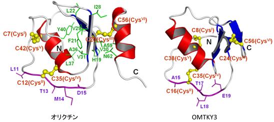 アミノ酸 構造
