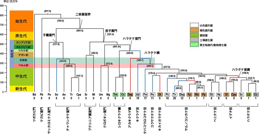 リグニン分解酵素の進化が石炭紀...