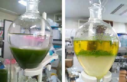 燃料 藻類 バイオ 藻類バイオ燃料への期待でも、2つの壁で日本は産油国にはなれないようだ