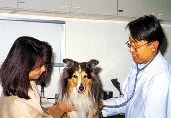 附属動物医療センターでは、開業動物病院からの紹介症例について二次診療を行っている。