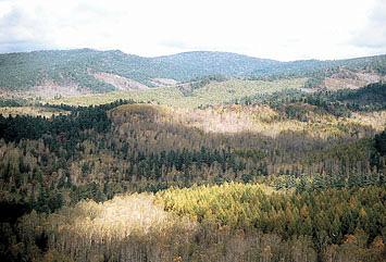 さまざまな森林からなるランドスケープ