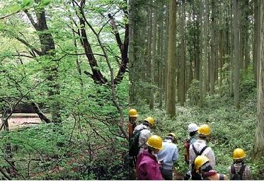 多くの生命を育む森林(左:ブナ天然林、右:スギ人工林での学生実習)